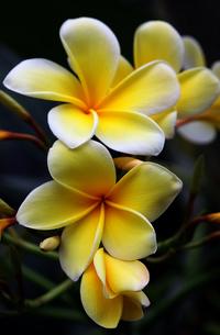 plants_flowersの素材 [FYI00819713]