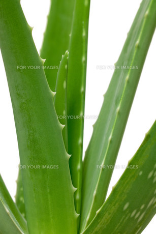 plants_flowersの素材 [FYI00819986]