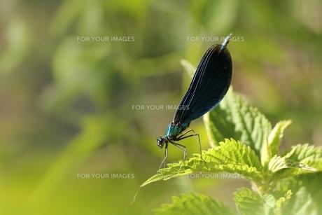 blueの素材 [FYI00820222]