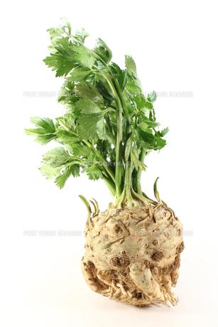vegetableの写真素材 [FYI00820802]