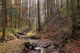 autumn forestの素材 [FYI00820855]