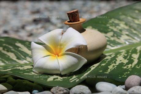 massage oilの素材 [FYI00821306]