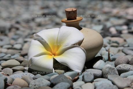 massage oil & amp  frangipaniの素材 [FYI00821360]