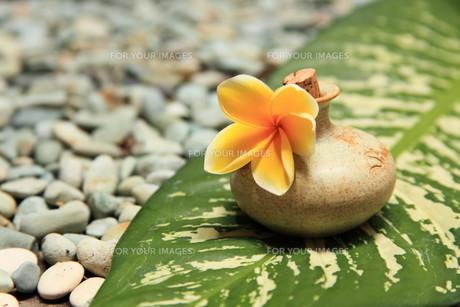 massage oilの素材 [FYI00822568]
