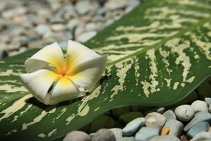 plants_flowersの素材 [FYI00823064]