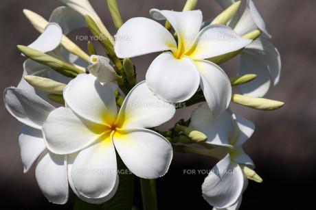 plants_flowersの素材 [FYI00823262]
