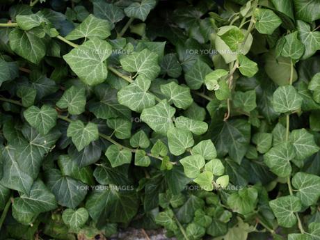 leavesの素材 [FYI00823523]