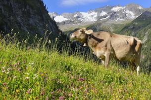 beefの写真素材 [FYI00823959]