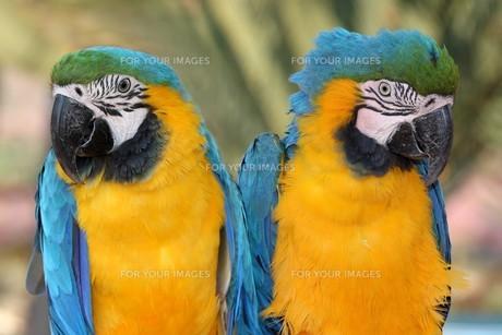 birdsの写真素材 [FYI00824141]