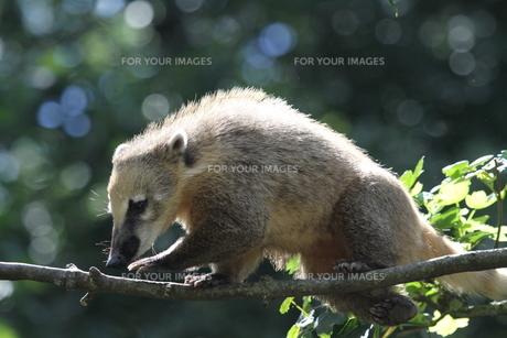 mammalsの素材 [FYI00824435]