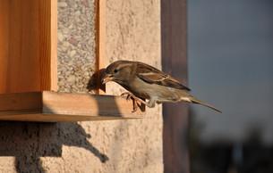 birdsの写真素材 [FYI00825057]