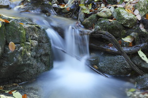 fresh mountain streamの写真素材 [FYI00825107]