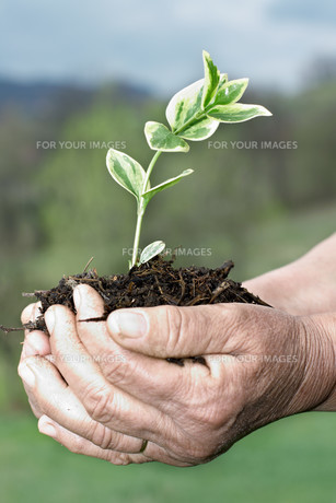 ecologyの写真素材 [FYI00825177]