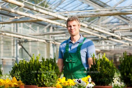 gardener in greenhouse gardeningの素材 [FYI00825475]