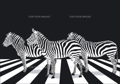 zebras on crosswalkの素材 [FYI00825604]