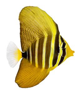 fishes_crustaceansの写真素材 [FYI00825976]