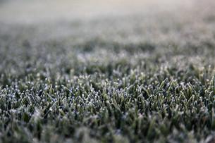 grass_fieldsの写真素材 [FYI00826757]