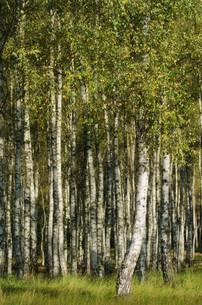 treeの素材 [FYI00828132]