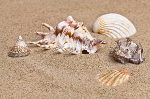 shellfishの写真素材 [FYI00828146]