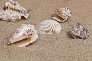 shellfishの写真素材 [FYI00828161]