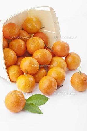 orangeの素材 [FYI00828654]