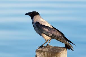 birdsの写真素材 [FYI00828774]
