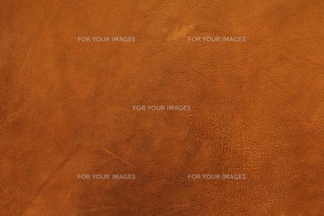 brownの写真素材 [FYI00828811]