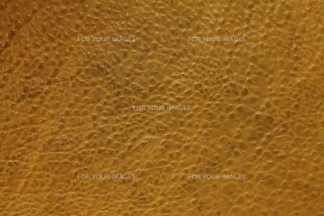 brownの写真素材 [FYI00828812]