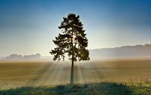treeの素材 [FYI00829913]