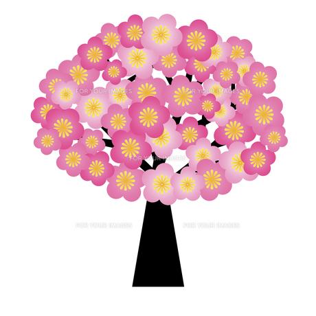bloomの写真素材 [FYI00829945]