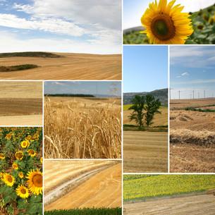 photo_montagesの写真素材 [FYI00829986]