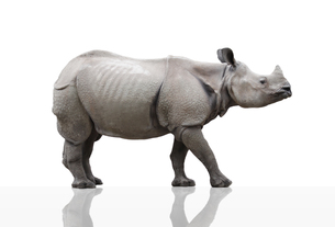 rhinoの写真素材 [FYI00831210]