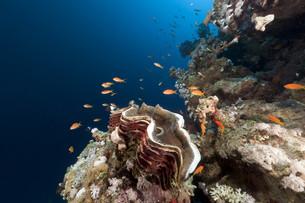fishes_crustaceansの写真素材 [FYI00831312]