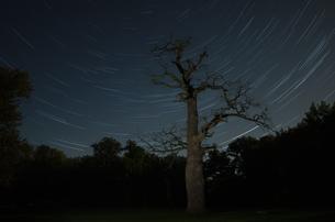 old oak tree in front of a starry sky at ivenack,mecklenburg-vorpommern,germanyの写真素材 [FYI00831353]
