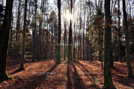 autumn forestの素材 [FYI00831798]