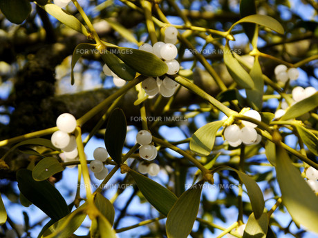 plants_flowersの素材 [FYI00832043]