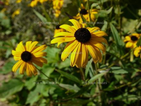 plants_flowersの素材 [FYI00832259]