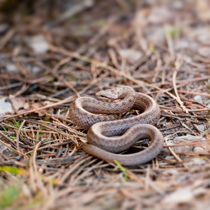 reptiles_amphibiansの写真素材 [FYI00832634]