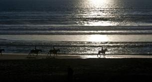 horses and seaの写真素材 [FYI00833132]