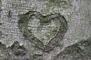 beef heartの写真素材 [FYI00833409]