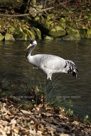 birdの写真素材 [FYI00833560]