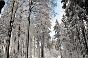 snow in the mountains in winterの写真素材 [FYI00834339]