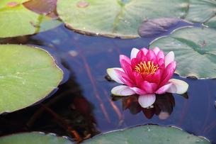 plants_flowersの写真素材 [FYI00834461]