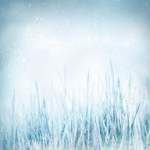 winterの写真素材 [FYI00834474]