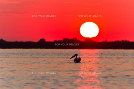 sunrise_sunsetの写真素材 [FYI00834487]