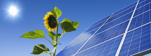solar,energy,power,solar panel,sun,sunflower,lightの写真素材 [FYI00834670]