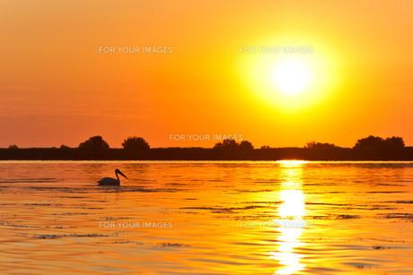sunrise_sunsetの写真素材 [FYI00834917]