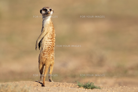 mammalsの写真素材 [FYI00835289]