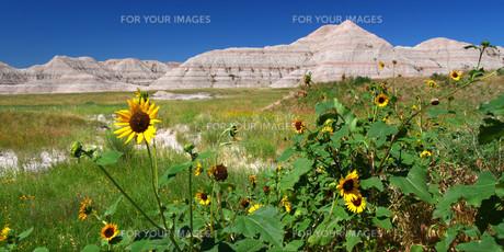 grass_fieldsの写真素材 [FYI00835550]