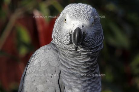 birdの写真素材 [FYI00835595]